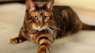Az Instagramon keresi a macskáját az államfő