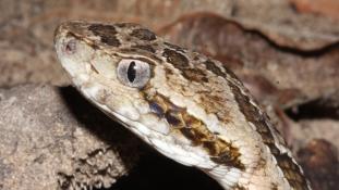 Madárpókok, kígyók és skorpiók: lakótársaim bemutatkoznak 1.rész