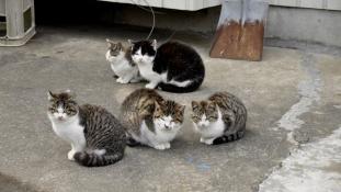 Éljenek a nyulak! – Tömeges macskaivartalanítás Japánban