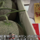 Milliókért kelt el két dinnye Japánban