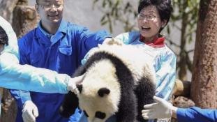 Ingyen pandapark a hongkongiaknak