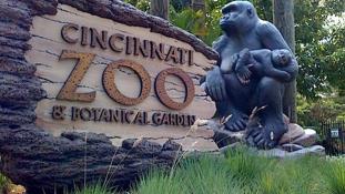 Gyors nyugtatóval kísérleteznek, hogy ne kelljen lelőni a látogatók miatt az állatkertek lakóit