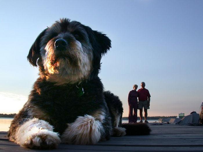 optical-illusion-giant-dog-32__700