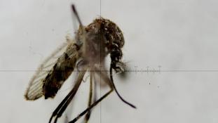 Már félezer zikafertőzött van az Egyesült Államokban – több mint felük terhes nő