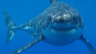 Elkapták a szörfös gyilkosát, a cápát