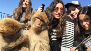 A majmok Gibraltáron sem kímélik a turistákat