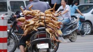 A kínaiak többsége betiltaná a kutyahús-fesztivált