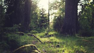 Megvan a büntetésből az erdőben hagyott japán kisfiú
