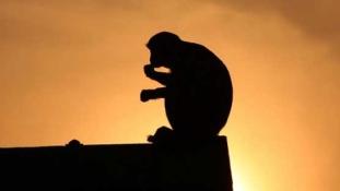 Egy majomnak sikerült órákra lebénítania Kenyát