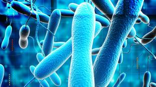 Már nyolc emberéletet követelt az újabb kolerajárvány Ugandában