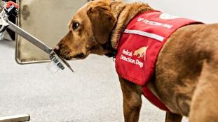 Bill Gates kutyákat vetne be a malária ellen