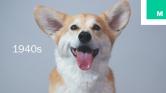 Így változott a szépségideál az állatoknál – videó