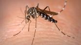 Elérte Európát a zikavírus