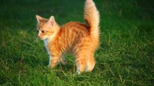 A macska magának való lény, ne úgy kezeld mint a gyereket vagy a kutyát!