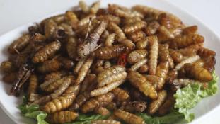 Finom, tápláló – együnk rovarokat