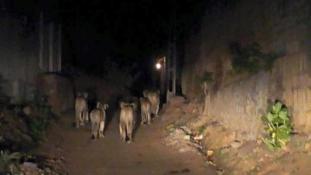 Különös turisták lepték el a várost az éjszakában