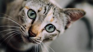 Állatok is szenvednek a horrorkamion után Nizzában