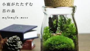 Legyen egy kis zöld az életünkben – Mini mohakertek Japánból