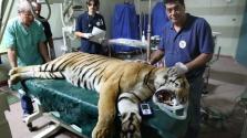 Bezárt a gázai állatkert – az állatok külföldi gyógykezelésre utaztak