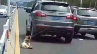 Addig húzta a kutyust az autója után, míg el nem pusztult