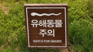 Mérgeskígyók a koreai határon