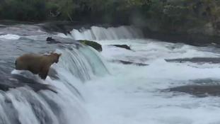 Medvemama menti három engedetlen bocsát a vízesésben – videó