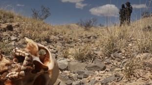 Hatvan holttestet találtak egy tömegsírban Mexikóban