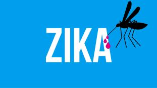 Bevitték Lengyelországba is a zikát