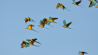 Rentabilidad y sustentabilidad: conservacionistas y ganaderos unen fuerzas para proteger la sabana beniana