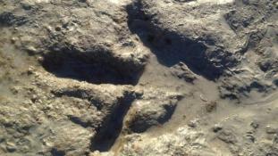 Dínó-lábnyomot találtak egy ausztrál strandon
