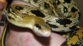 Kígyókat keltet a hálószobájában, hogy megmentse őket