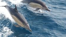 Ha delfinül beszélsz, a földönkívüliekkel is szót érthetsz