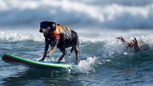 Így szörfözik a világbajnok kutya – videó