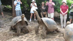 Diego, a szexőrült teknős újranépesíti a Galápagos-szigeteket