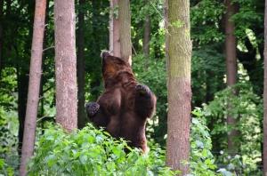 bear-358168_960_720