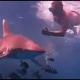 Nagyon veszélyes cápát találtak Sarm es-Sejknél