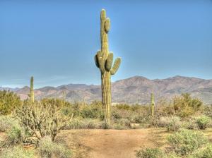 cactus-913532_960_720