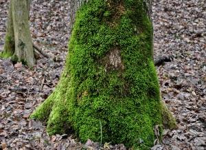 mossy-tree-trunk-1076991_960_720