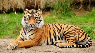 Páncélosok vitték el a vadállatokat az egyiptomi farmról, ahol leopárd tépett szét egy kislányt