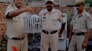Postagalambot vettek őrizetbe Indiában