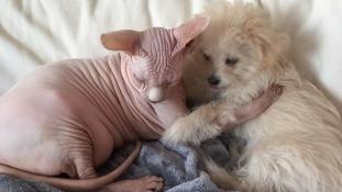 Botox és Lulu – egy kutya-macska barátság képei