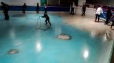Japánban 5000 halat fagyasztottak be egy korcsolyapályába