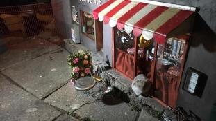 Ennél cukibbat ma biztos nem fog látni! Egereknek nyitottak üzletet Svédországban