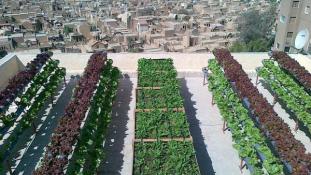 Az egyiptomiak megmutatják – így csinálj kertet a tetőn
