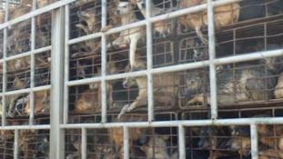 Bezárják Dél-Korea legnagyobb kutyahúspiacát