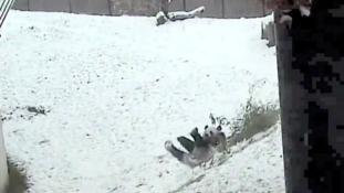 A pandamaci és a hóember – videó