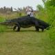 Ez nem a Jurassic Park jelenete, hanem egy átlagos floridai vasárnap!