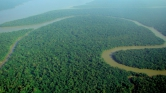 Norvégia 400 millió dolláros alapot hozott létre az esőerdők megmentésére