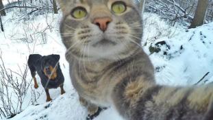 Manny, a szelfiző macska világsztár lett – videó