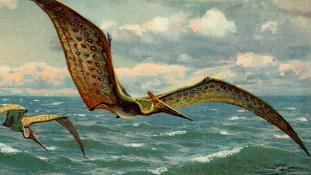 Dinófaló pteroszaurusz csontvázára bukkantak Erdélyben